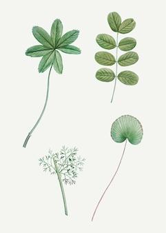 Varie foglie verdi