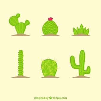 Various hand drawn cacti