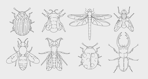 Various insects set in outline design