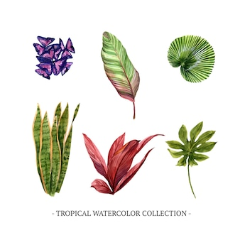 Various isolated watercolor foliage