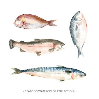 Various isolated watercolor seafood illustration .