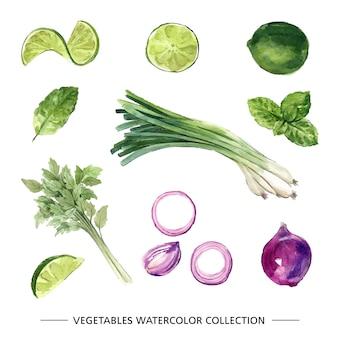 장식용 흰색 배경에 다양 한 격리 된 수채화 야채 그림.
