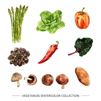 Various isolated watercolor vegetable