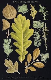 다양한 잎 빈티지 벽 예술 인쇄 포스터 디자인은 원본 삽화에서 리믹스합니다.