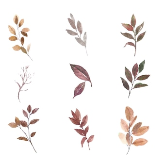 Various leaves watercolor set element on white for decorative use.