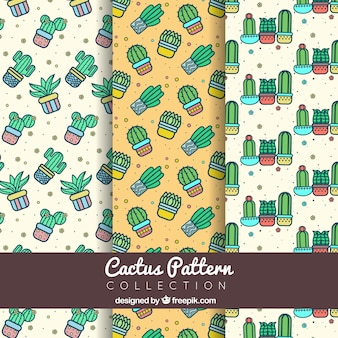 Various patterns of decorative cacti