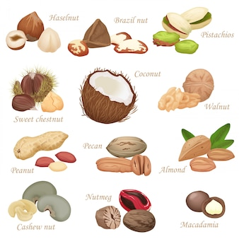 Various realistic nuts and seeds set