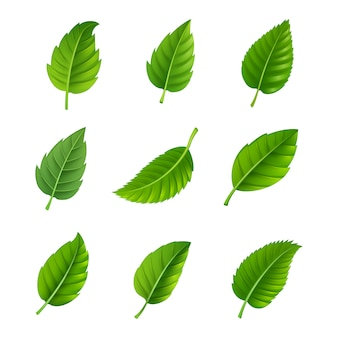 Various shapes and forms of green leaves set