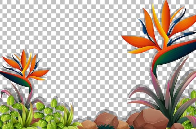 Различные тропические растения на прозрачном фоне