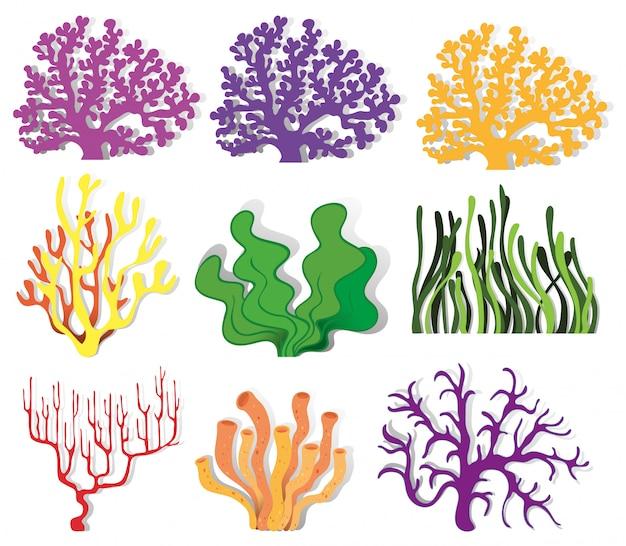 Различный тип кораллового рифа