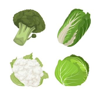 Набор различных типов картонной капусты
