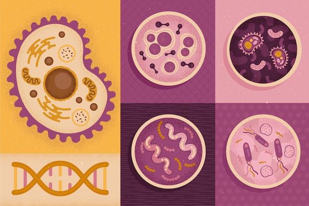 학교 개념으로 돌아가는 다양한 유형의 세포