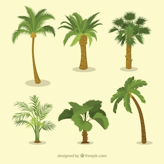 Various types of palm trees