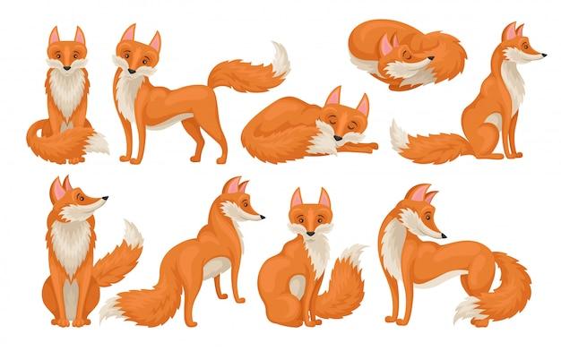 Вектое множество ярко-рыжей лисы в разных действиях. дикое существо с пушистым хвостом. мультфильм лесное животное