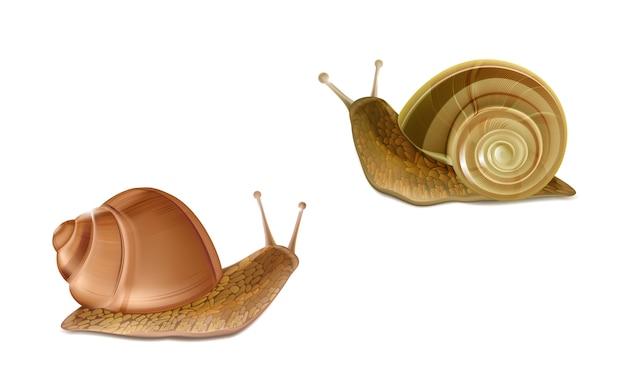 3 dリアルな2つの忍び寄るブルゴーニュまたはローマのカタツムリをベクトルします。フランス料理のデリカテッセン、食用、およびf