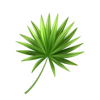 Vector 3d tropical palm leaf exotic vacation