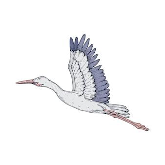 Векторные художественные иллюстрации ручной работы с пером и чернилами аист в полете