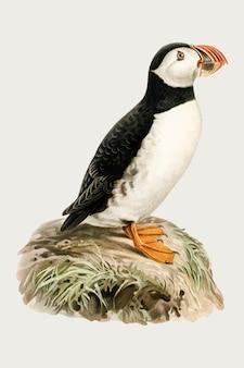 Вектор атлант птица рисованной