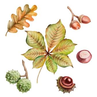 栗のどんぐりと白で隔離の葉のベクトル秋のイラスト手描き画像