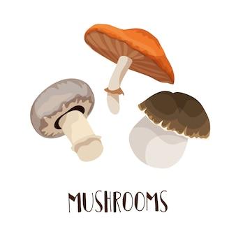 Набор векторных осенних грибов - белыми грибами, шампиньонами, шафранной молочной шапочкой или лисичками.