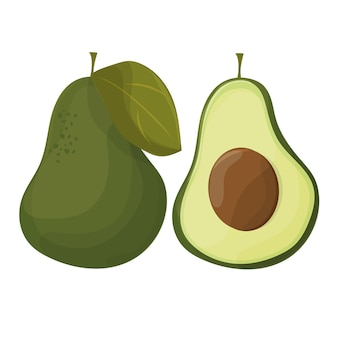 Vector avocados illustration. whole and cut avocado isolated on white background.