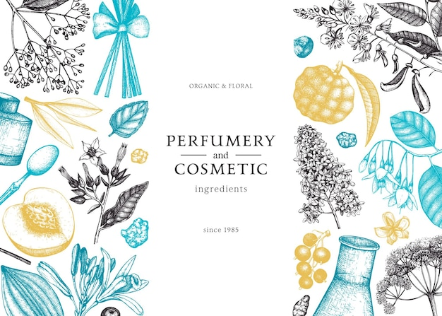 香水と化粧品の成分のイラストをスケッチした香りのよい果物とベクトルの背景。芳香族および薬用植物のバナーデザイン。色の植物テンプレートベクトルイラスト。
