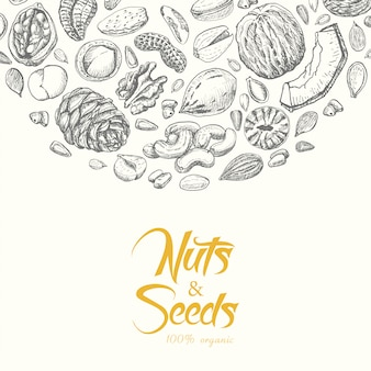 Vector background with nuts and seeds