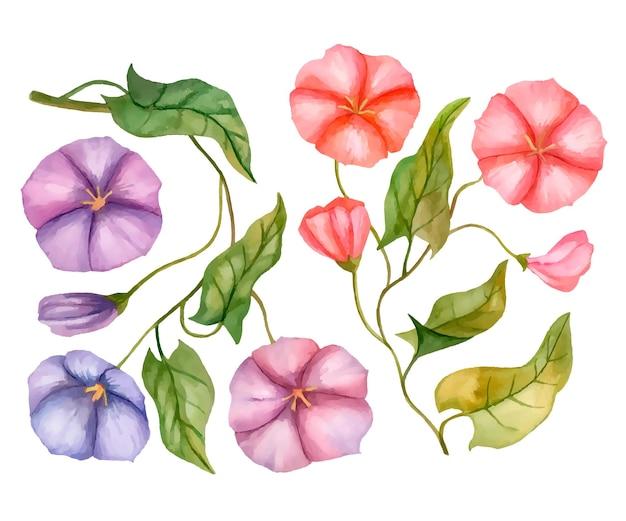 흰색 배경에 고립 된 꽃 요소의 벡터 메꽃 꽃 손으로 그린 그림