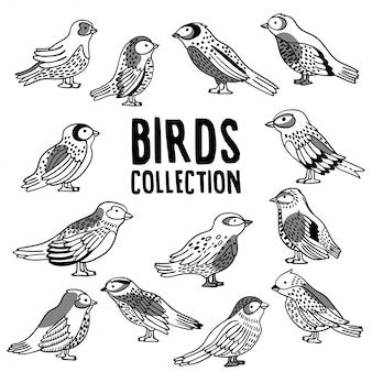 Vector bird collection