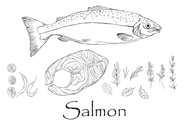Vector black and white drawing of salmon and steak with spices