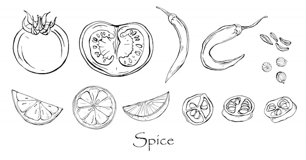 Vector black and white drawing of spicy spices.