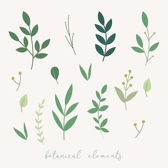 Vector botanical decoration elements. floral leaves set.