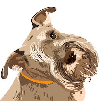 Вектор породы цвергшнауцер собака крупным планом