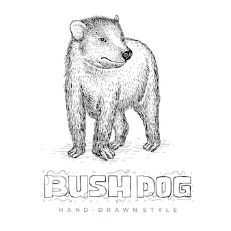 Vector bush dog in hand drawn style. realistic animal illustrations