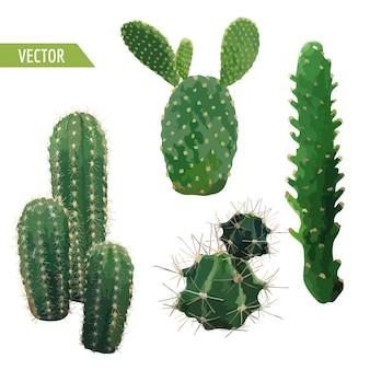 ベクトルサボテン植物。エキゾチックな熱帯の夏の植物の背景。
