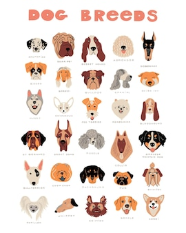 Vector cartoon dog breeds. cute doodle illustration. set of different dog faces, front view