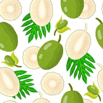 흰색 바탕에 artocarpus altilis 또는 breadfruit 이국적인 과일 꽃과 잎이 있는 벡터 만화 원활한 패턴