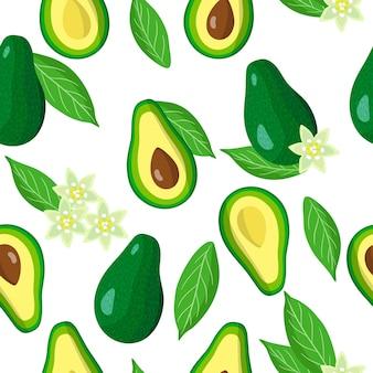 아보카도 이국적인 과일, 꽃 및 흰색 배경에 잎 벡터 만화 원활한 패턴
