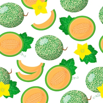 Vector cartoon seamless pattern with cantalupensis or cucumis melo exotic fruits, flowers and leafs