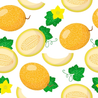 Vector cartoon seamless pattern with cucumis melo or melon exotic fruits, flowers and leafs on white background