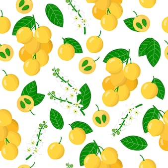 Vector cartoon seamless pattern with lansium parasiticum or langsat exotic fruits, flowers and leafs