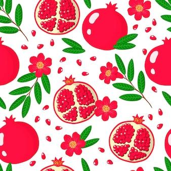 白い背景の上のザクロまたはpunicaエキゾチックな果物、花、葉とベクトル漫画のシームレスなパターン