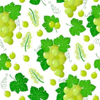 Vitis vinifera 또는 흰색 포도 이국적인 과일, 꽃 및 흰색 배경에 잎 벡터 만화 원활한 패턴