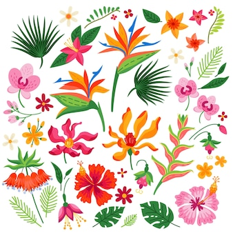 Vector cartoon set of tropical flowers isolated