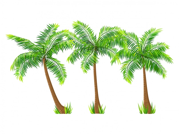Vector coconut palm trees set isolated on white