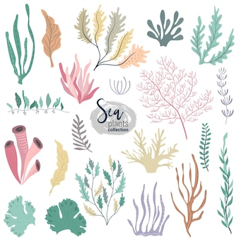 Vector collection of colorful underwater ocean coral reef plants corals and anemones