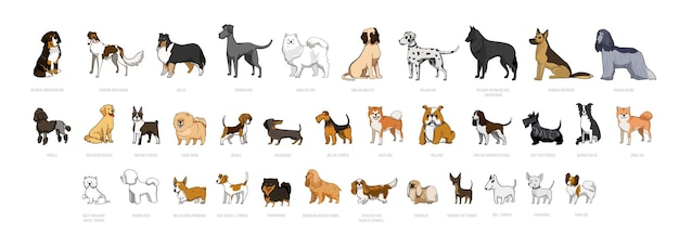 Vector collection of dogs of different breeds.