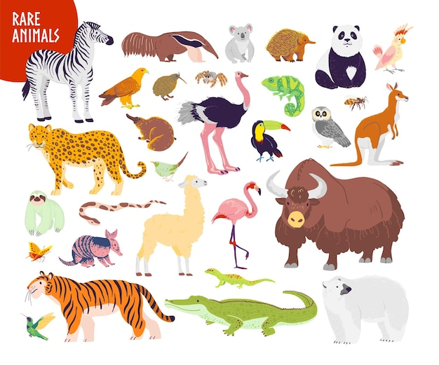 Vector collection of flat hand drawn rare wild animals isolated on white background: zebra, tiger, flamingo, echidna, yak, panda. for infographics, children alphabet, book illustration, card, banner.