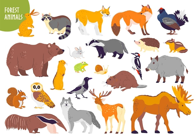 Vector collection of forest animals and birds bear fox hare owl isolated on white background