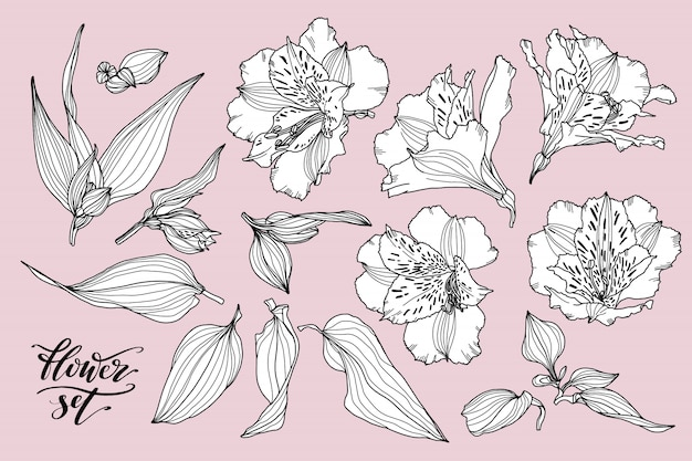 Vector collection of hand drawn flower elements.